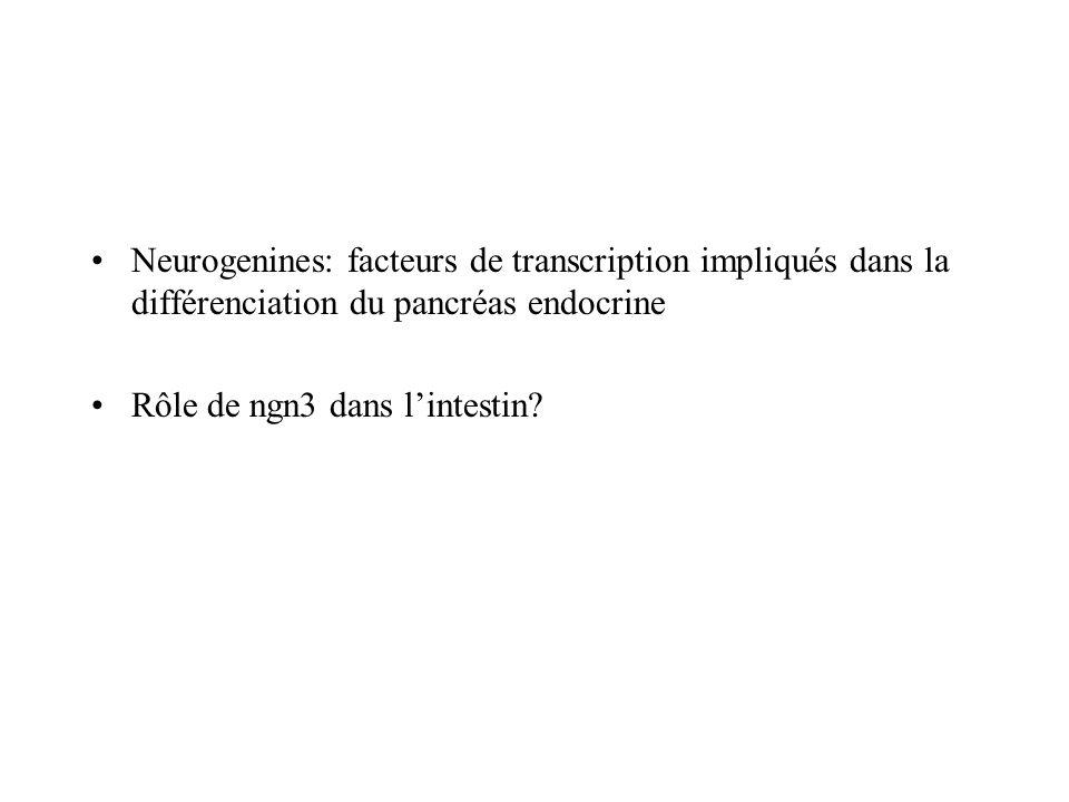 Neurogenines: facteurs de transcription impliqués dans la différenciation du pancréas endocrine