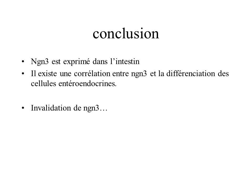 conclusion Ngn3 est exprimé dans l'intestin