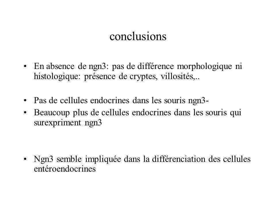 conclusions En absence de ngn3: pas de différence morphologique ni histologique: présence de cryptes, villosités,..