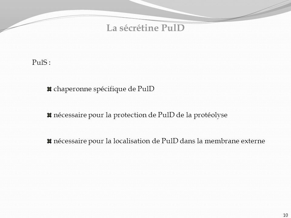La sécrétine PulD PulS : chaperonne spécifique de PulD