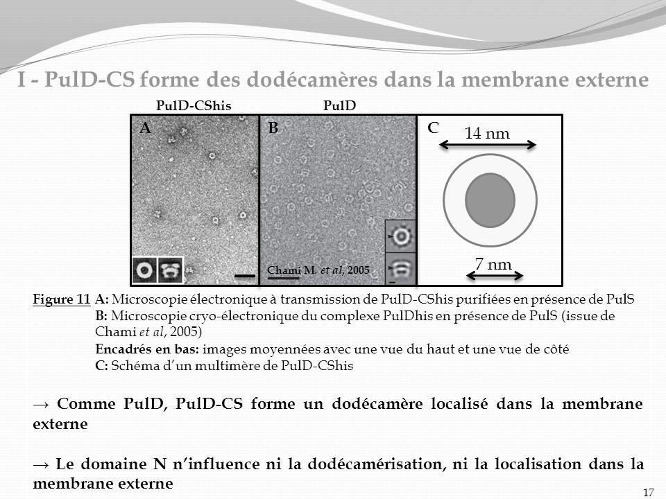 I - PulD-CS forme des dodécamères dans la membrane externe