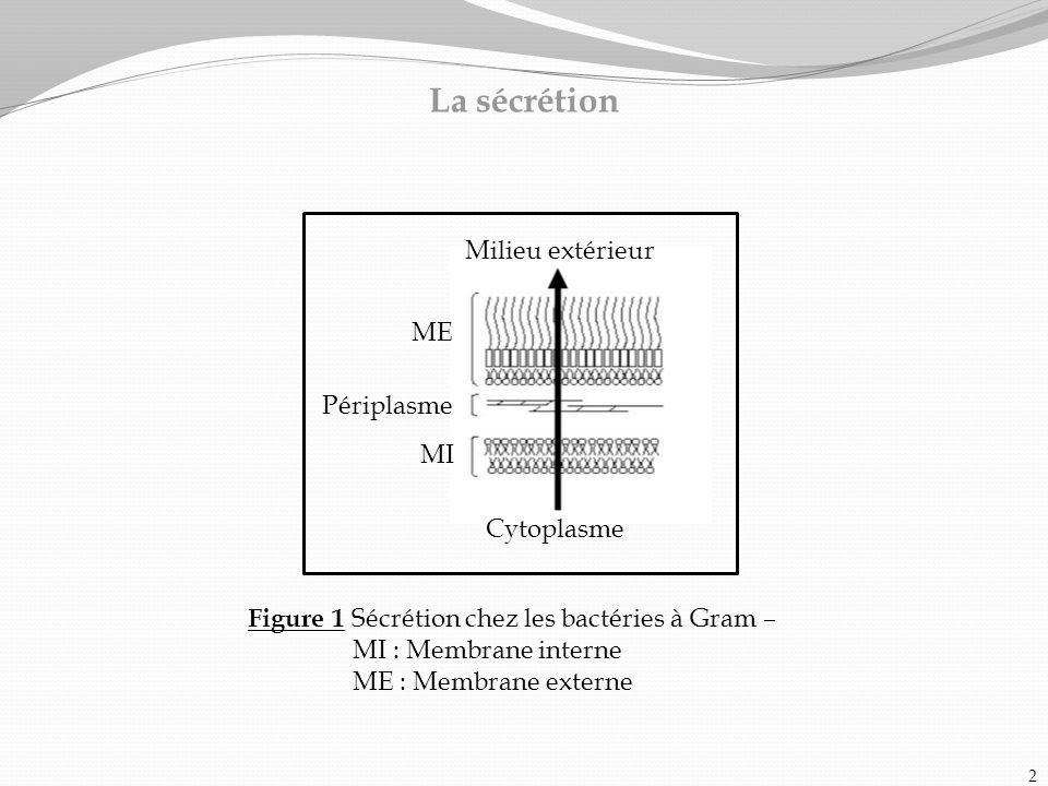 La sécrétion Milieu extérieur ME Périplasme MI Cytoplasme