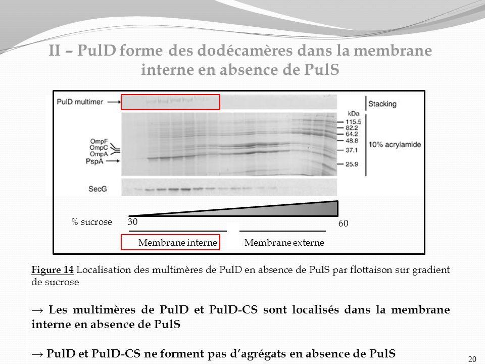 II – PulD forme des dodécamères dans la membrane interne en absence de PulS