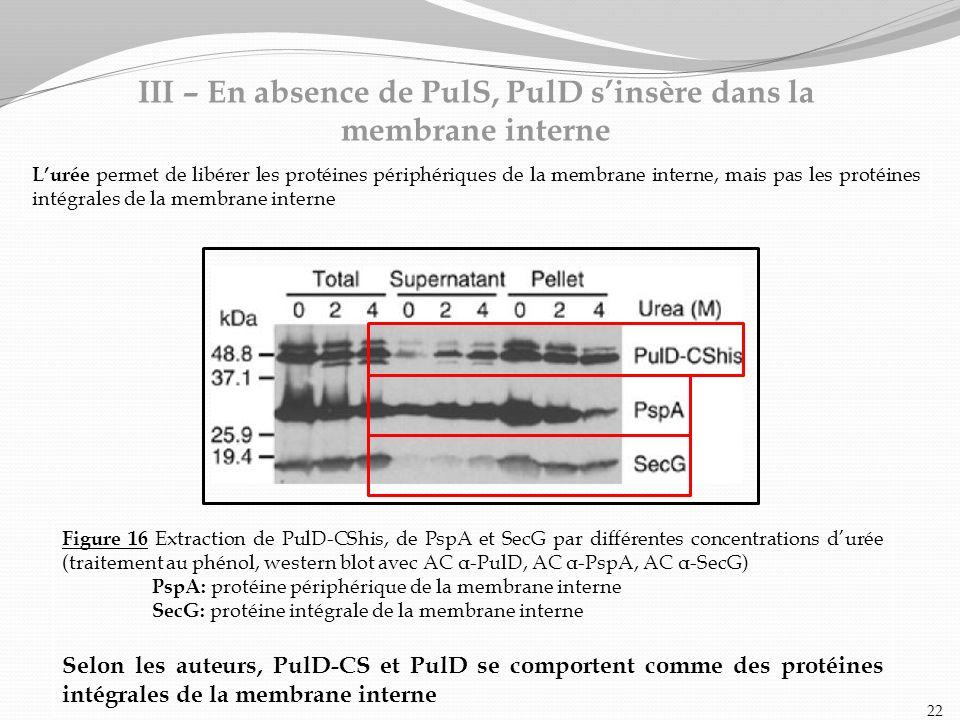 III – En absence de PulS, PulD s'insère dans la membrane interne