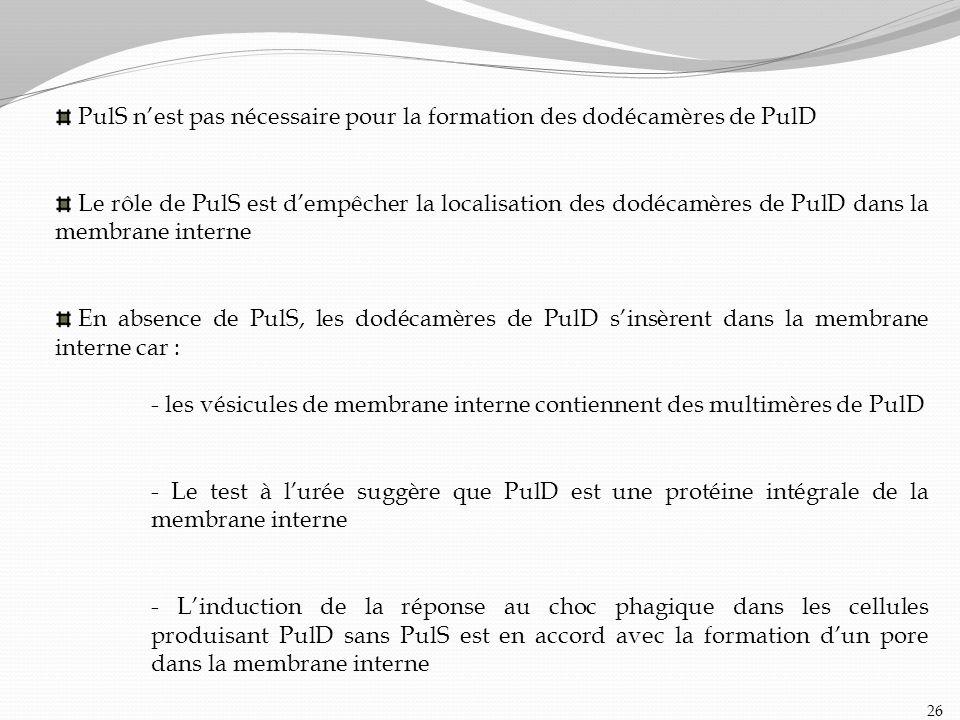 PulS n'est pas nécessaire pour la formation des dodécamères de PulD