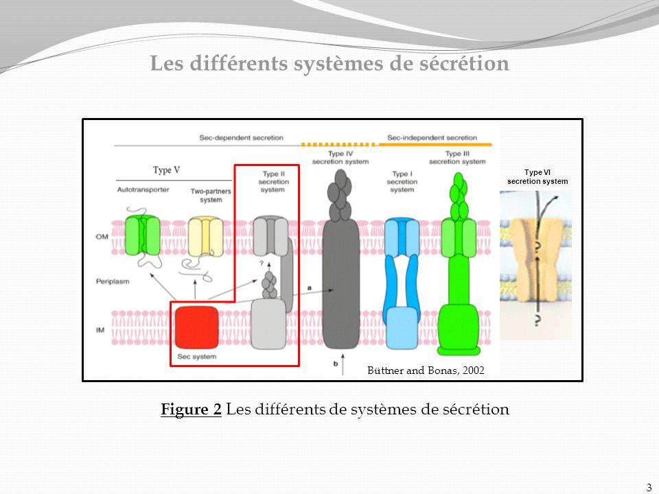 Les différents systèmes de sécrétion