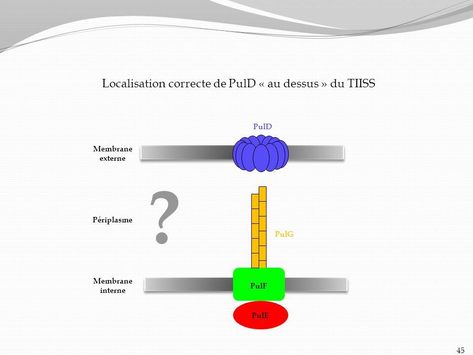 Localisation correcte de PulD « au dessus » du TIISS