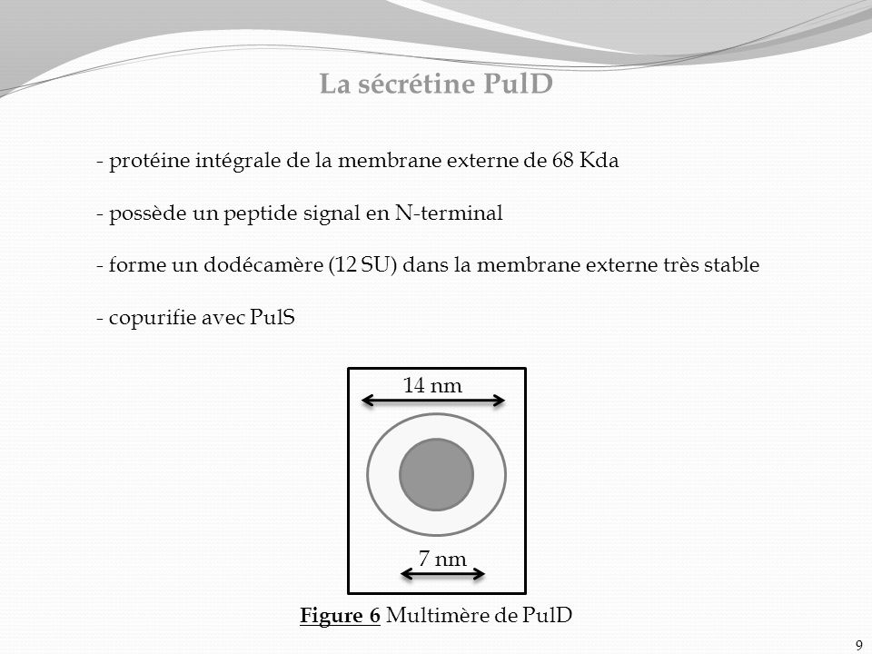 Figure 6 Multimère de PulD