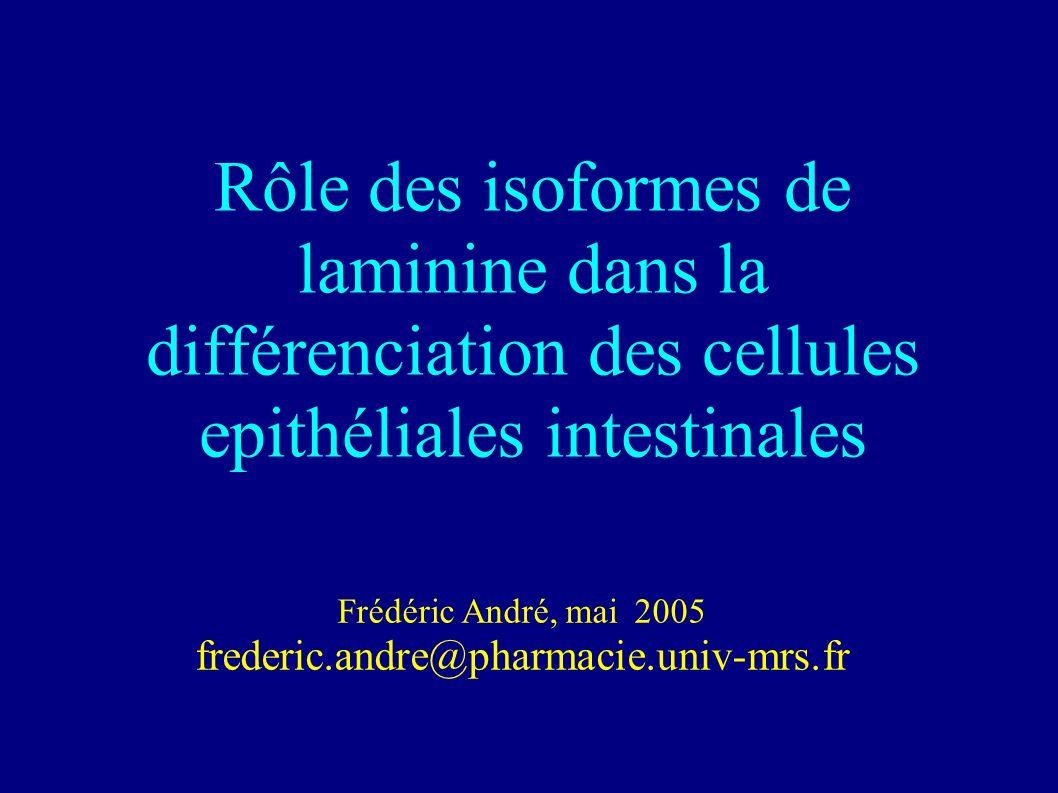 Frédéric André, mai 2005 frederic.andre@pharmacie.univ-mrs.fr