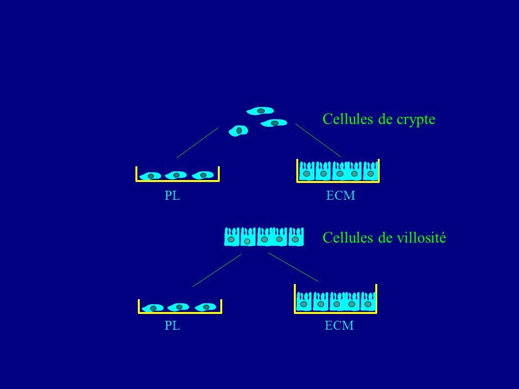 Cellules de crypte PL ECM Cellules de villosité PL ECM