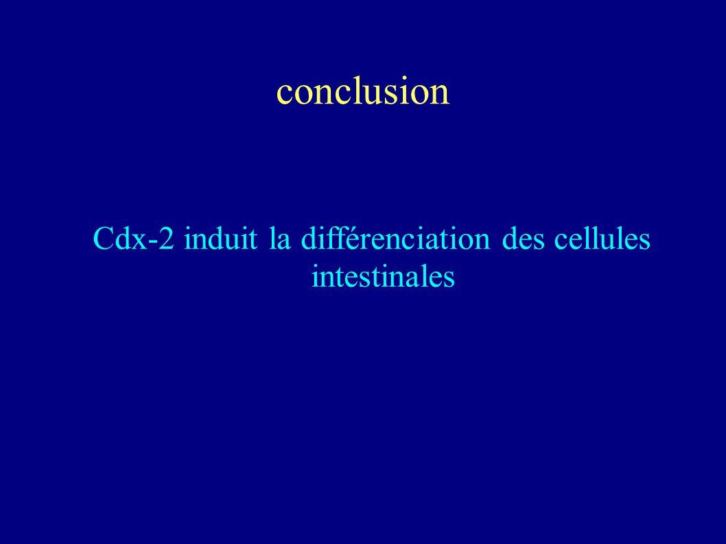 Cdx-2 induit la différenciation des cellules intestinales