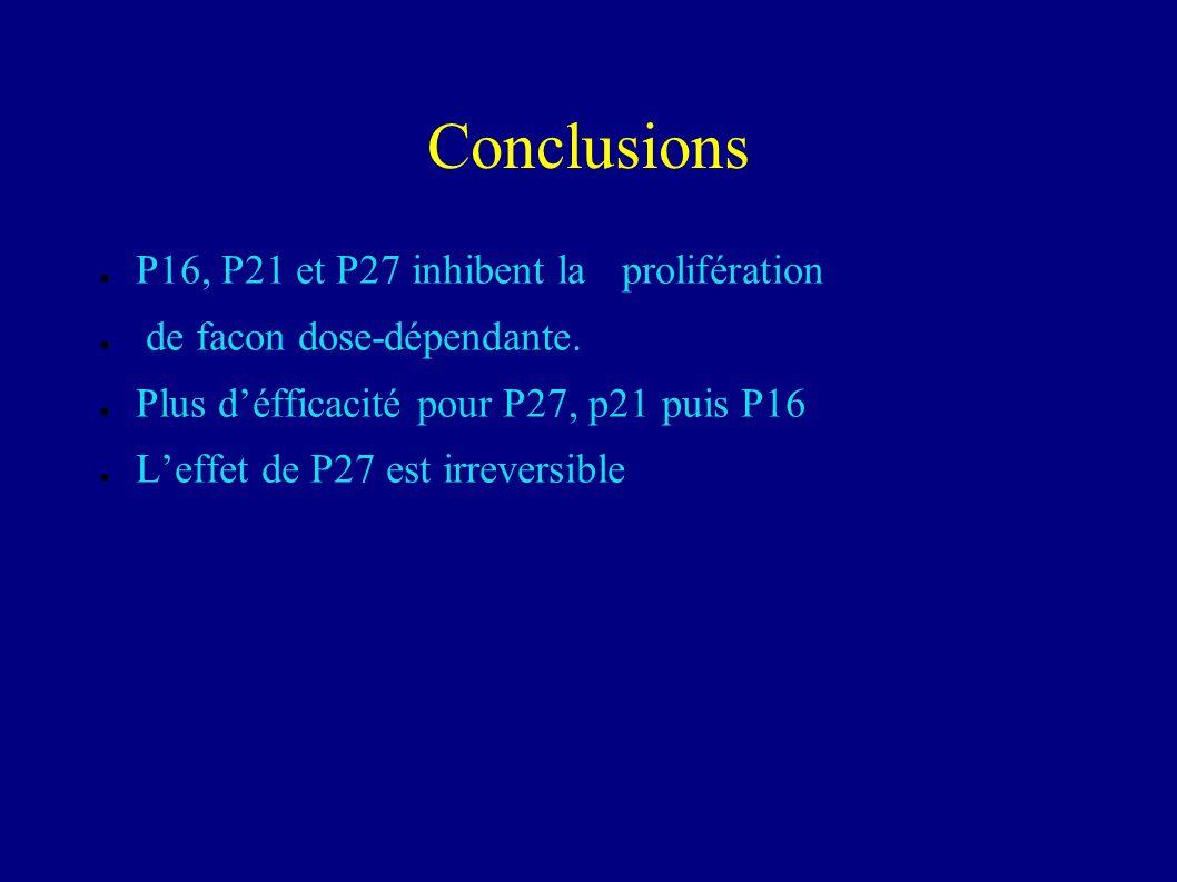 Conclusions P16, P21 et P27 inhibent la prolifération