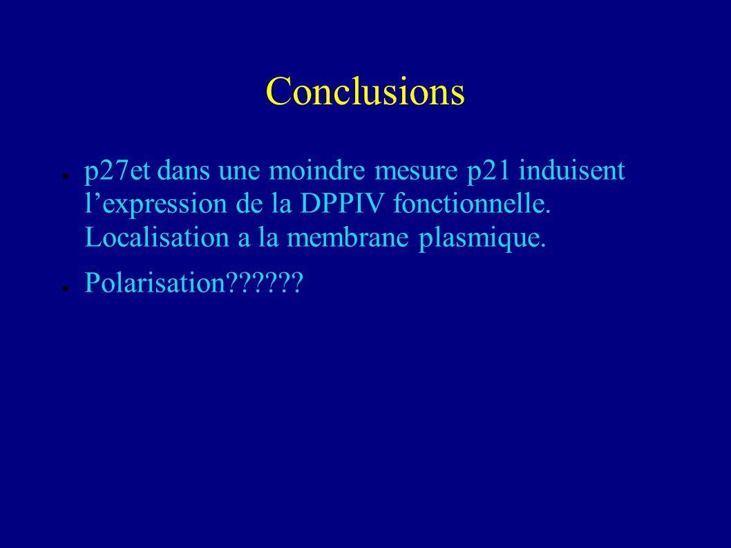 Conclusions p27et dans une moindre mesure p21 induisent l'expression de la DPPIV fonctionnelle. Localisation a la membrane plasmique.