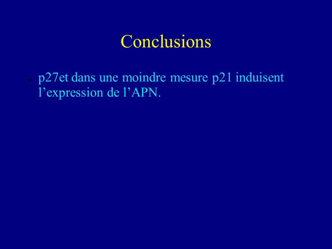 Conclusions p27et dans une moindre mesure p21 induisent l'expression de l'APN.