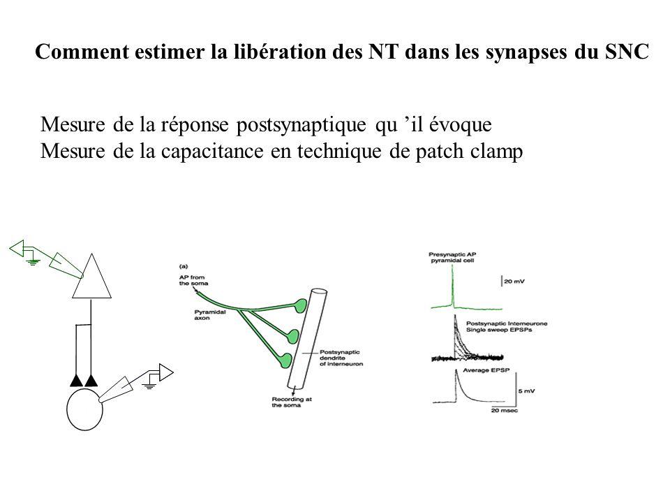 Comment estimer la libération des NT dans les synapses du SNC