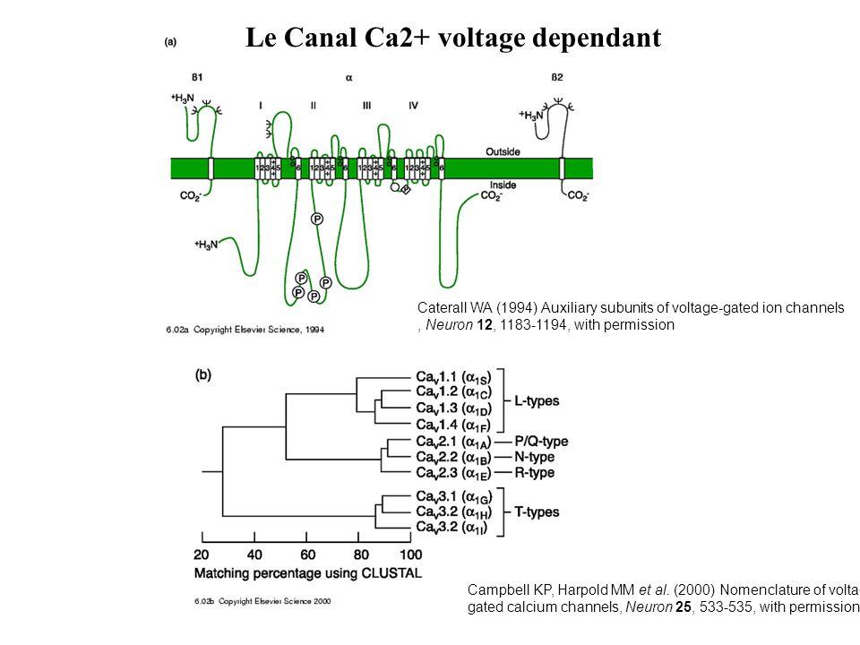 Le Canal Ca2+ voltage dependant