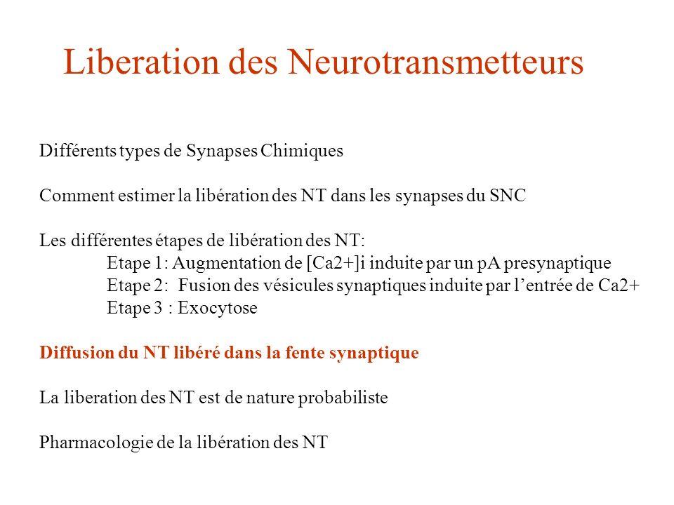 Liberation des Neurotransmetteurs