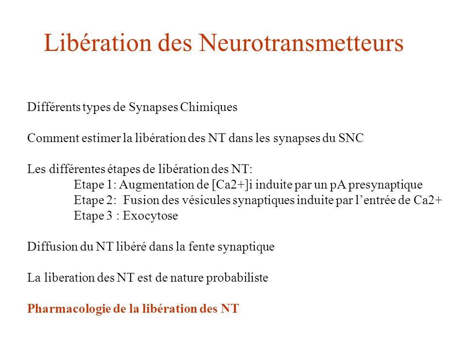 Libération des Neurotransmetteurs