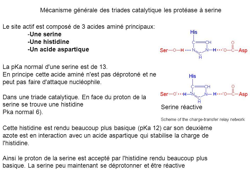 Mécanisme générale des triades catalytique les protéase à serine