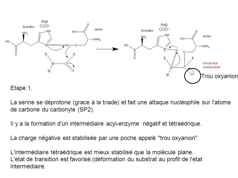 La charge négative est stabilisée par une poche appelé trou oxyanion