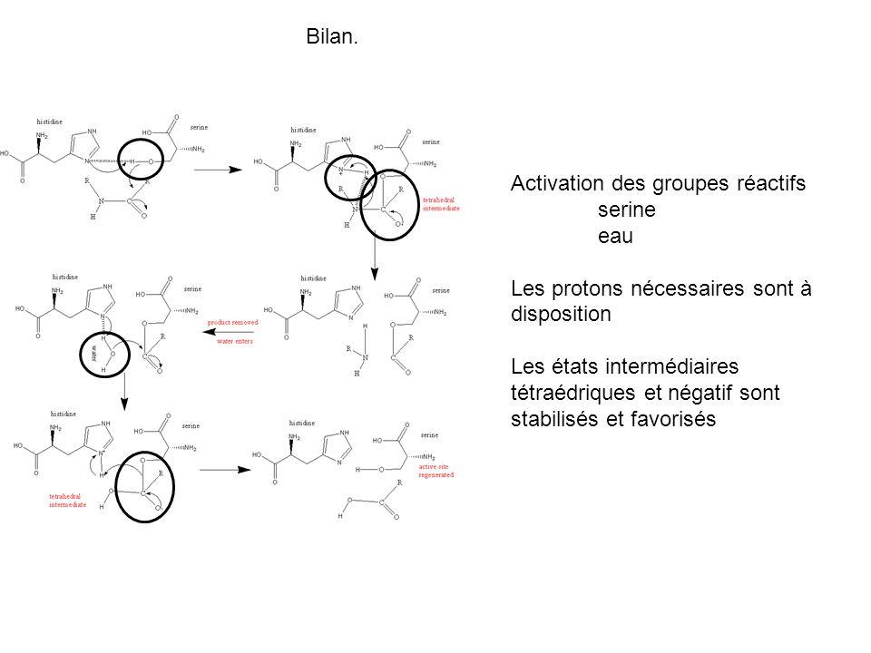 Bilan. Activation des groupes réactifs. serine. eau. Les protons nécessaires sont à disposition.