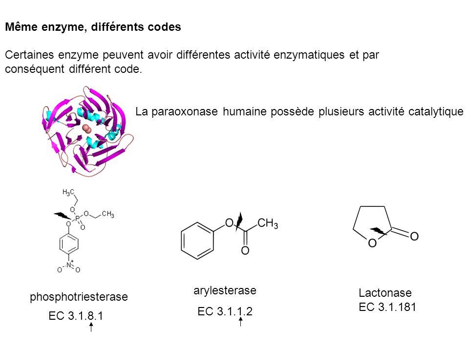 Même enzyme, différents codes