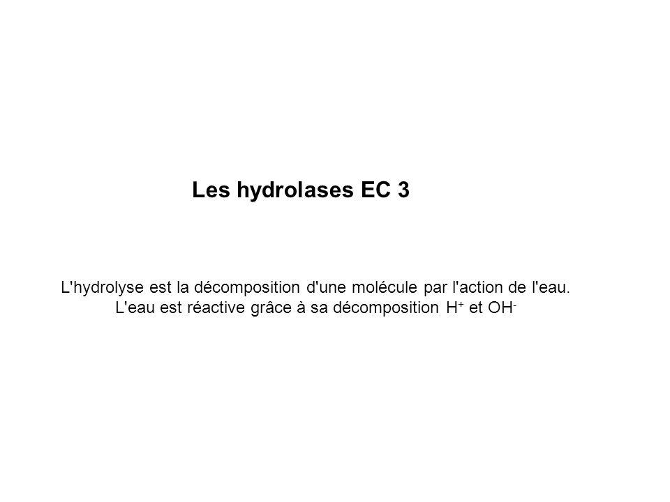 Les hydrolases EC 3 L hydrolyse est la décomposition d une molécule par l action de l eau.