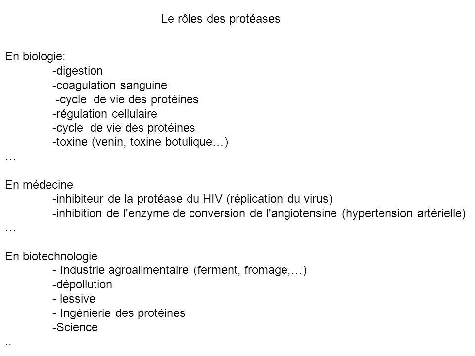 Le rôles des protéases En biologie: -digestion. -coagulation sanguine. -cycle de vie des protéines.