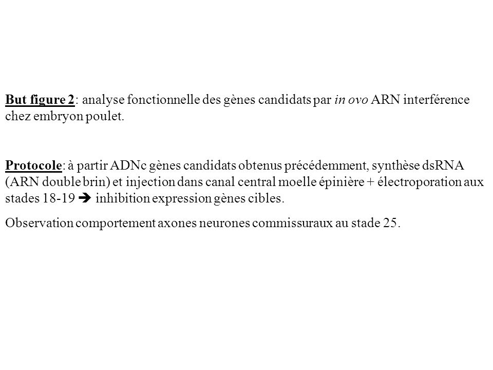 But figure 2: analyse fonctionnelle des gènes candidats par in ovo ARN interférence chez embryon poulet.
