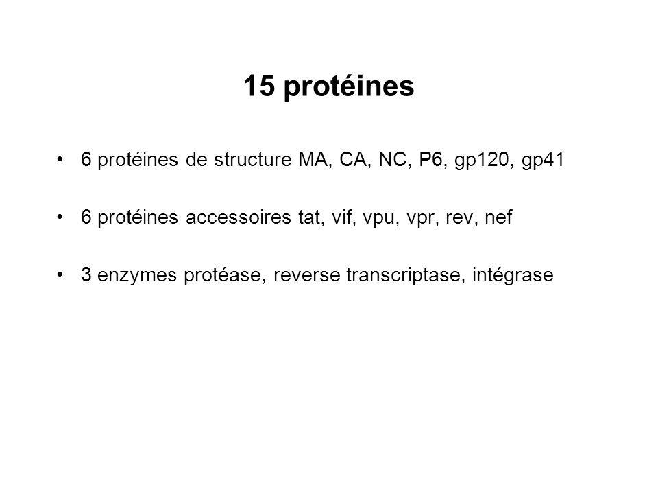 15 protéines 6 protéines de structure MA, CA, NC, P6, gp120, gp41