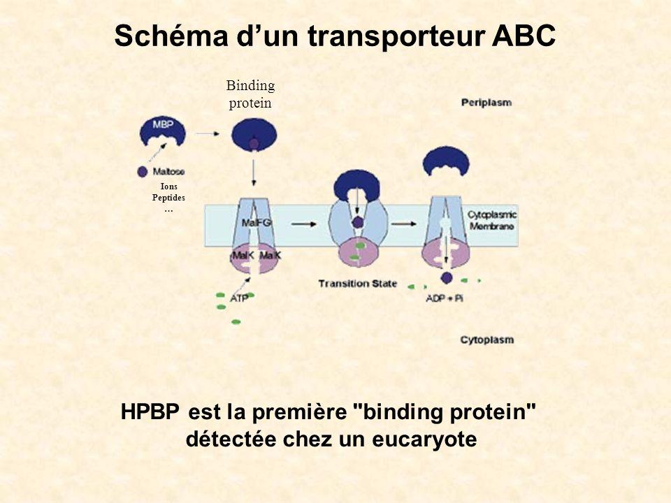 Schéma d'un transporteur ABC