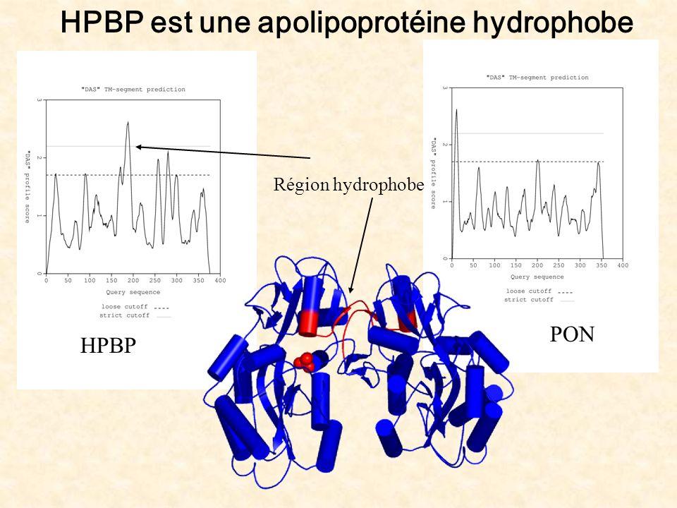 HPBP est une apolipoprotéine hydrophobe