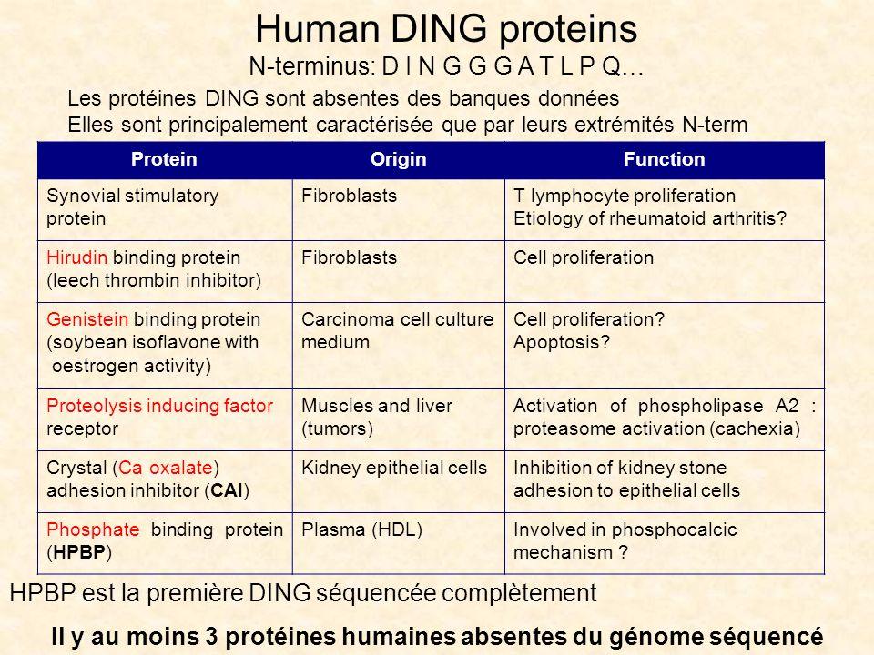 Il y au moins 3 protéines humaines absentes du génome séquencé