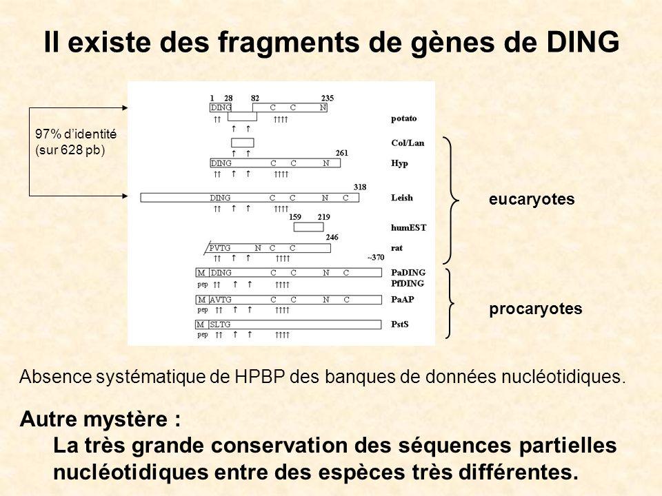Il existe des fragments de gènes de DING