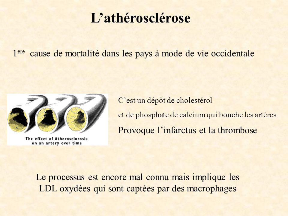 L'athérosclérose 1ere cause de mortalité dans les pays à mode de vie occidentale. C'est un dépôt de cholestérol.