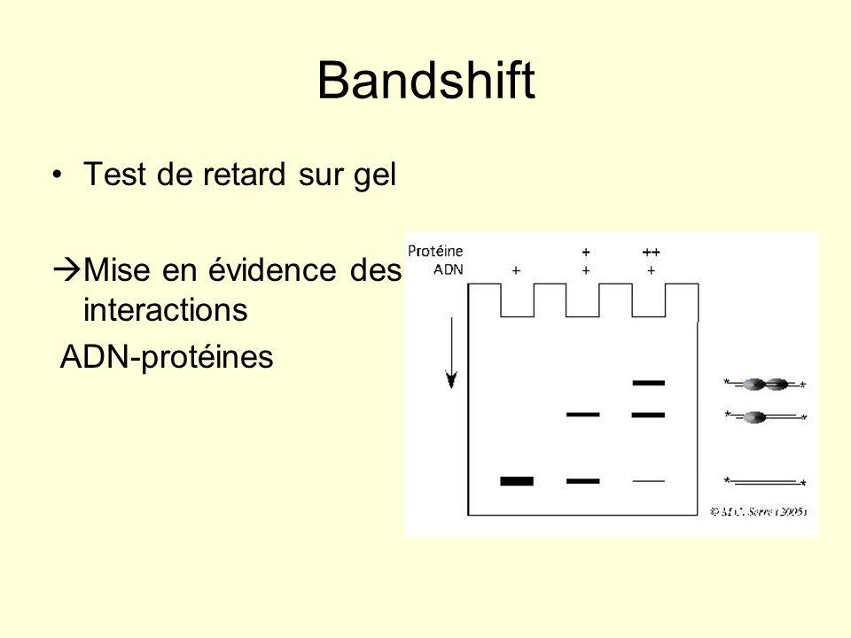 Bandshift Test de retard sur gel Mise en évidence des interactions
