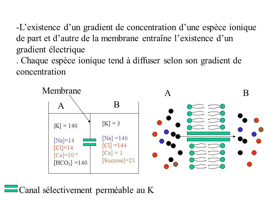 L'existence d'un gradient de concentration d'une espèce ionique