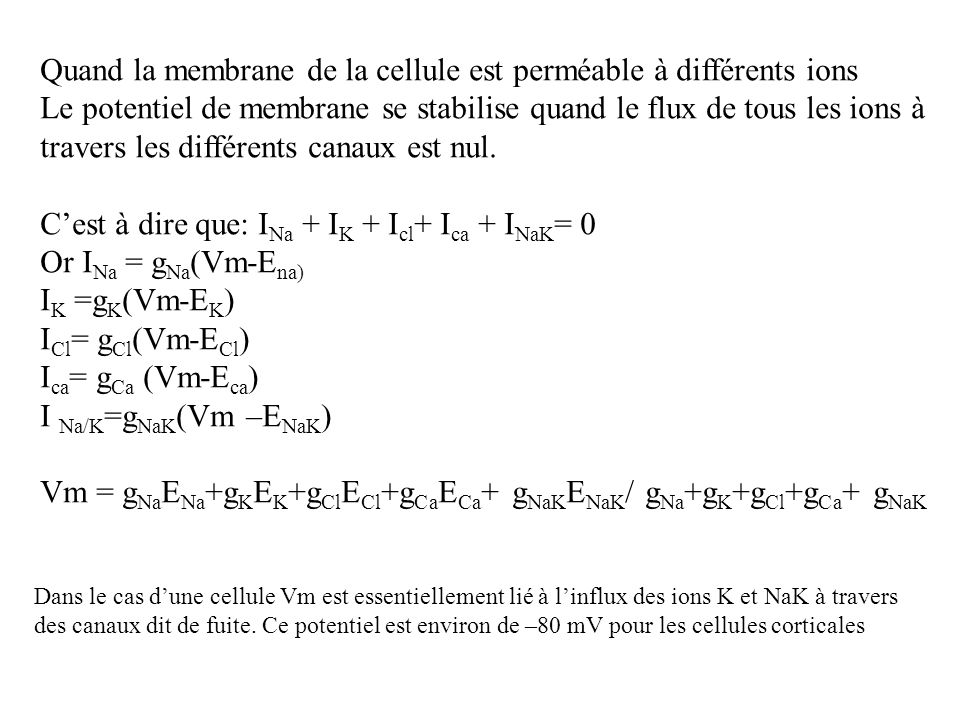 Quand la membrane de la cellule est perméable à différents ions