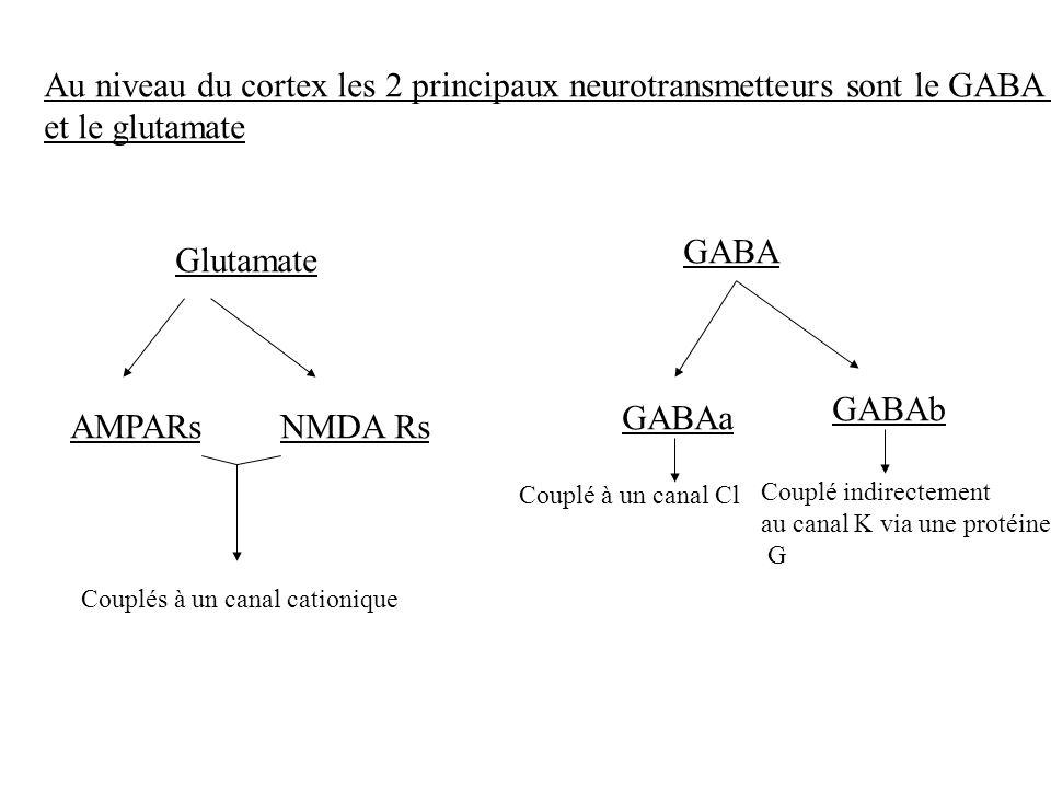 Au niveau du cortex les 2 principaux neurotransmetteurs sont le GABA