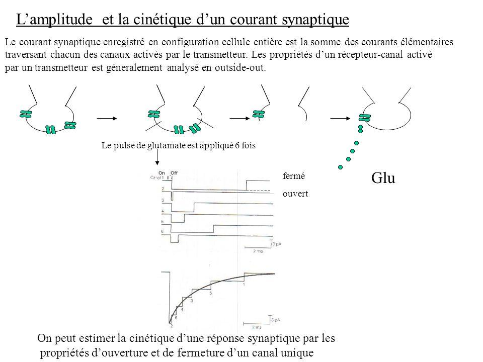 L'amplitude et la cinétique d'un courant synaptique