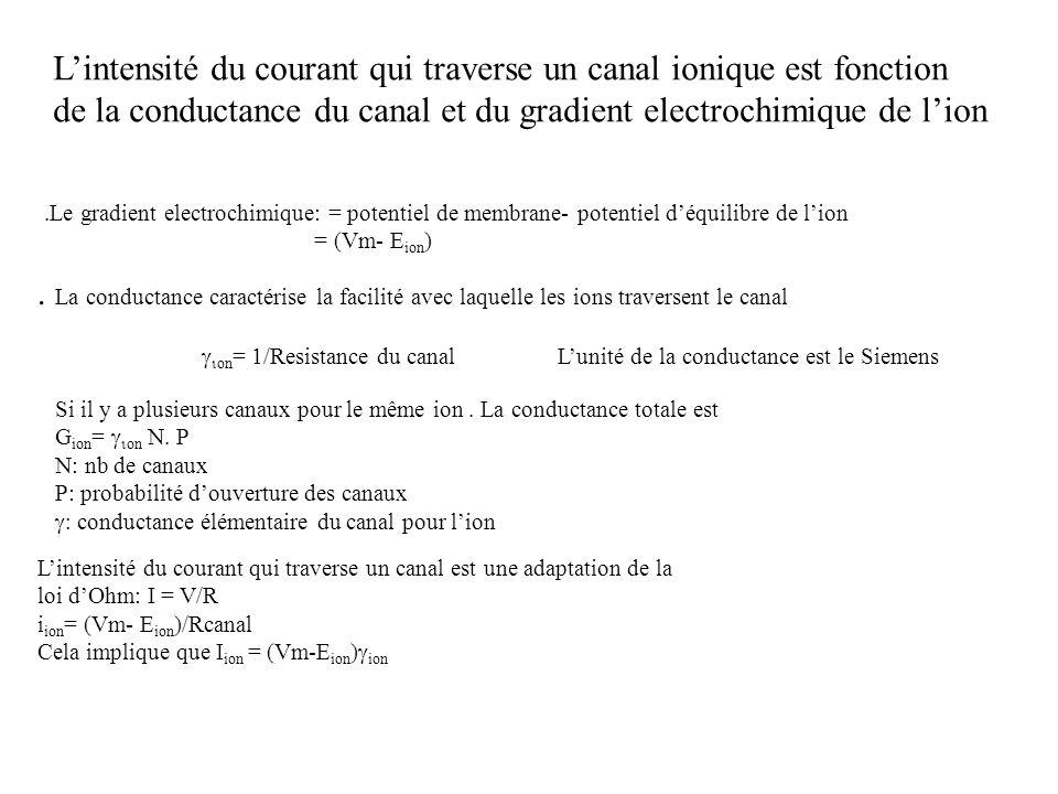 L'intensité du courant qui traverse un canal ionique est fonction