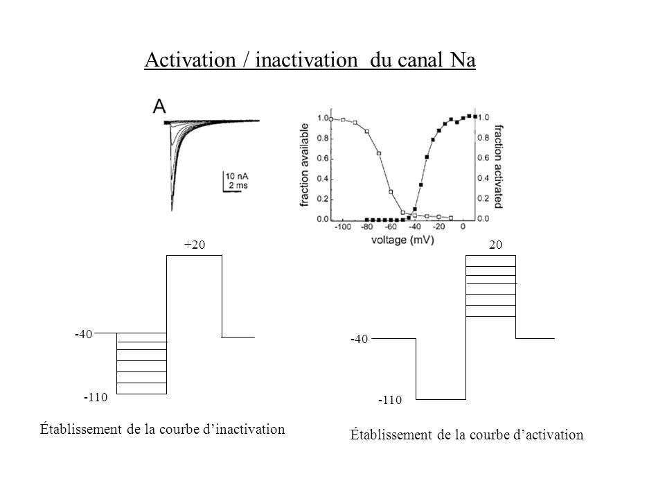 Activation / inactivation du canal Na