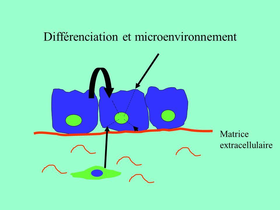 Différenciation et microenvironnement
