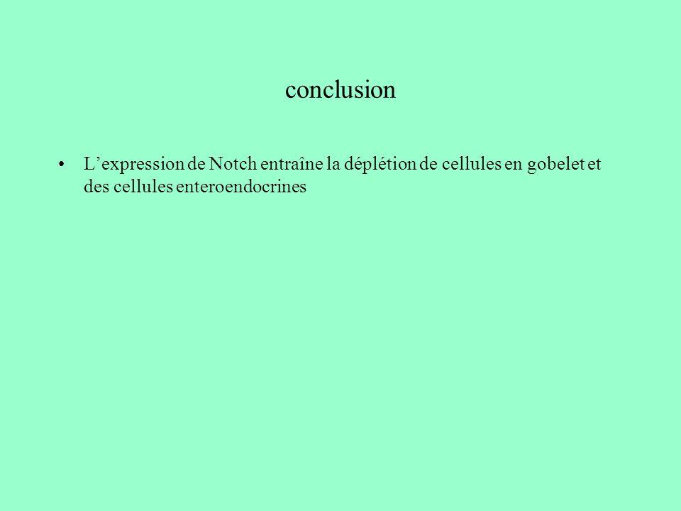 conclusion L'expression de Notch entraîne la déplétion de cellules en gobelet et des cellules enteroendocrines.