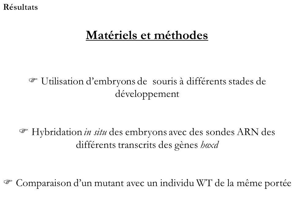 Résultats Matériels et méthodes. Utilisation d'embryons de souris à différents stades de développement.