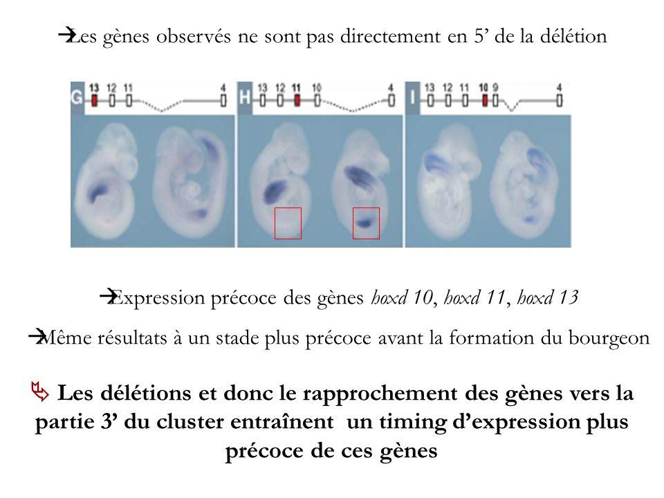 Les gènes observés ne sont pas directement en 5' de la délétion