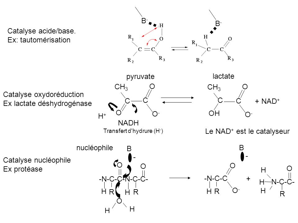 Catalyse oxydoréduction Ex lactate déshydrogénase C C C C + NAD+