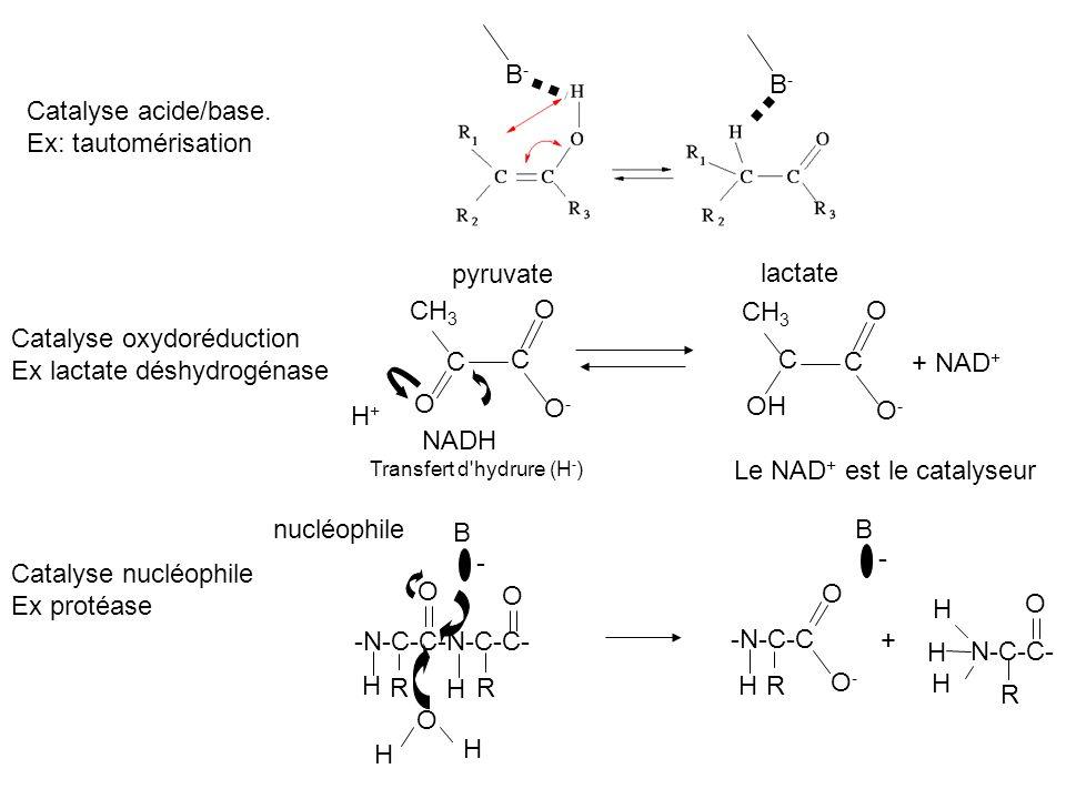 Catalyse oxydoréduction Ex lactate déshydrogénase C C C C + NAD+