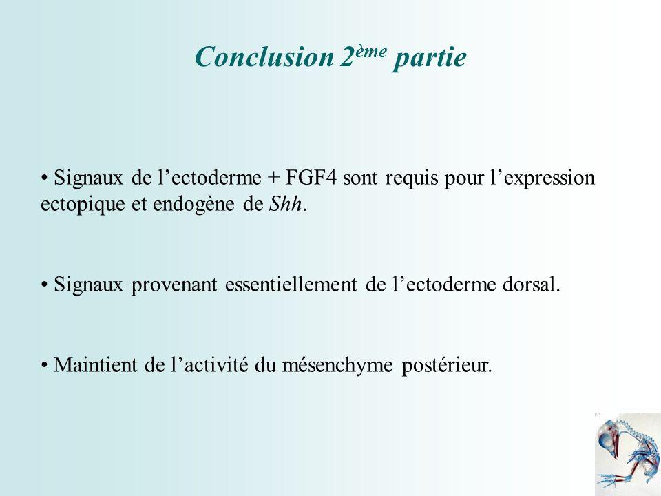 Conclusion 2ème partie Signaux de l'ectoderme + FGF4 sont requis pour l'expression ectopique et endogène de Shh.