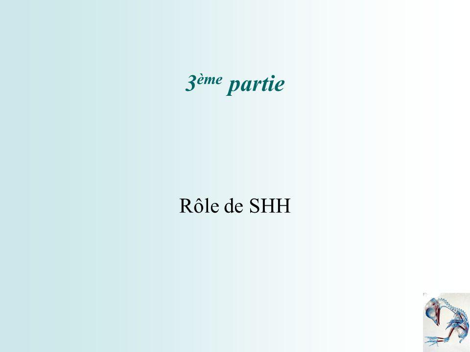 3ème partie Rôle de SHH